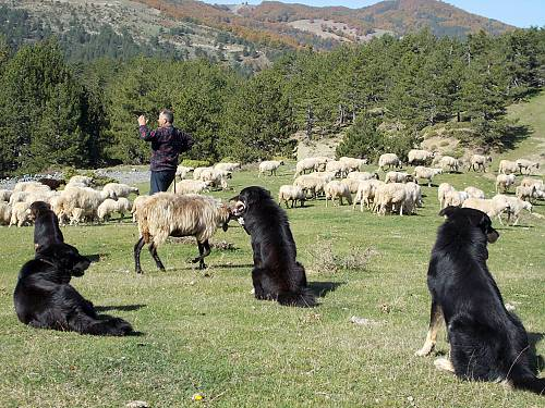 Transhumance - Greece on UNESCO's List of Intangible Cultural Heritage